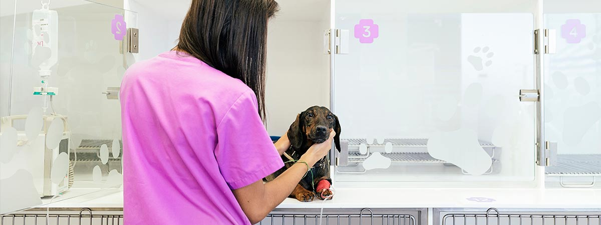 Veterinary Infection Prevention - Daro UV Systems